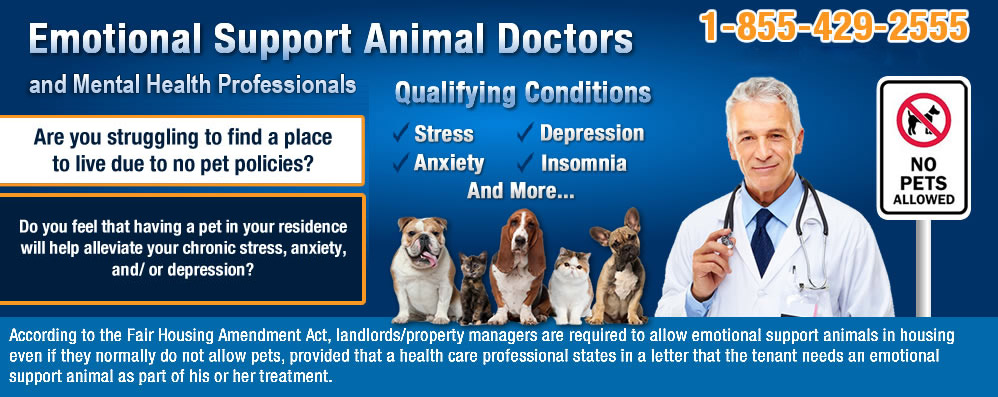 Image of: America Serabineco Emotional Support Animal Certification