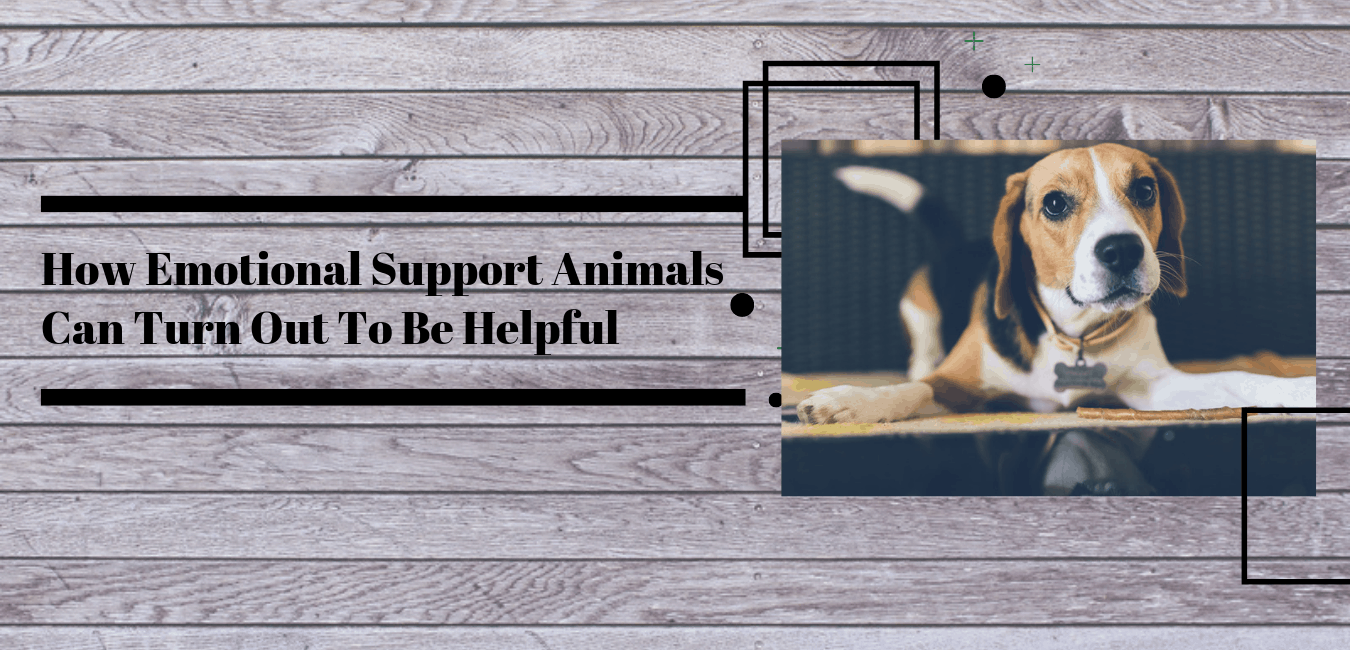 How Emotional Support Animals Can Turn Out To Be Helpful